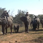 LODGE ELEPHANT RIDE8